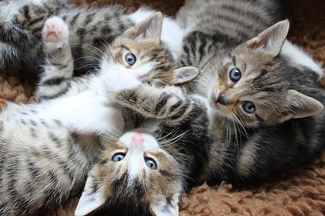 Domček pre mačky je tá správna voľba!